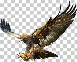 Bald Eagle Golden Eagle Flight Drawing PNG