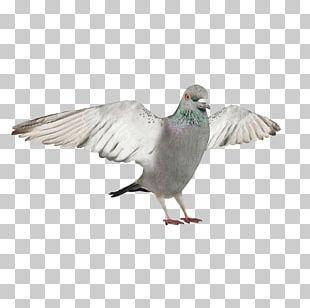 Bird 3D Modeling Autodesk 3ds Max Wavefront .obj File 3D Computer Graphics PNG