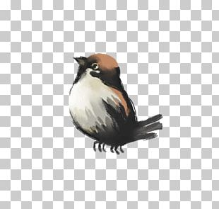 Bird Ink Painting Drawing PNG