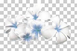 Cut Flowers Floral Design Tulip Color PNG