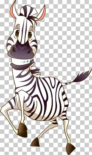 Zebra Photography PNG