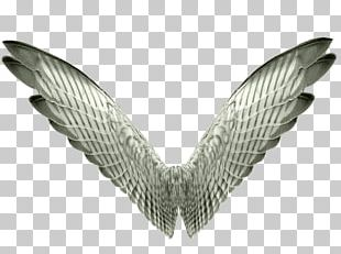 Bird Wing Butterfly Aile PNG