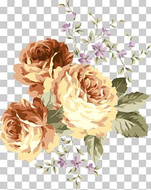Centifolia Roses Flower Euclidean PNG