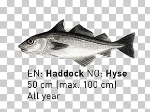 09777 Cod Fauna Salmon Oily Fish PNG