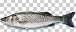 European Bass Japanese Sea Bass Striped Bass Fish PNG