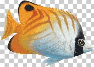 Saltwater Fish Coral Reef Fish PNG