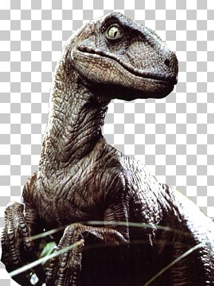 Velociraptor Jurassic Park: The Game Utahraptor Dinosaur PNG