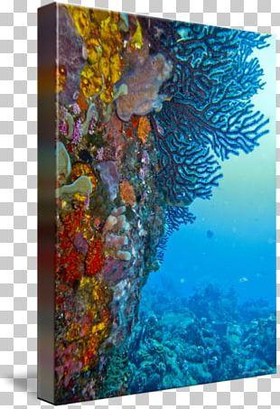 Coral Reef Fish Modern Art Marine Biology PNG