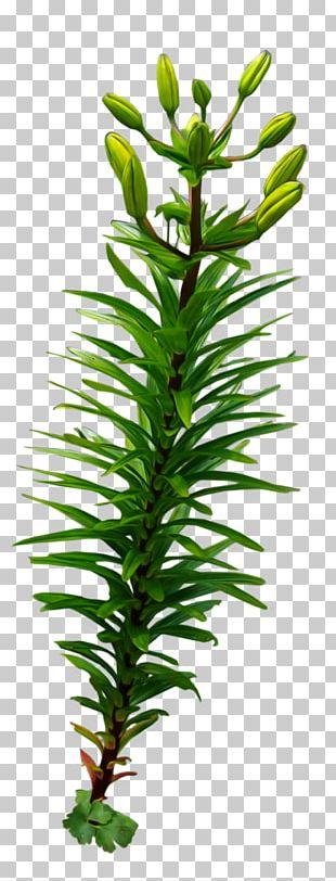 Desktop Seaweed PNG