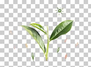 Tea Leaf Green PNG