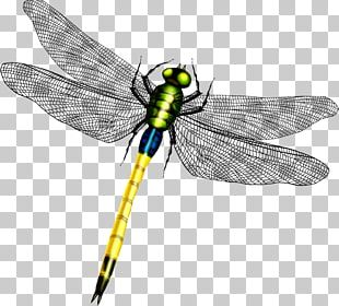 Dragonfly Wing Icon PNG