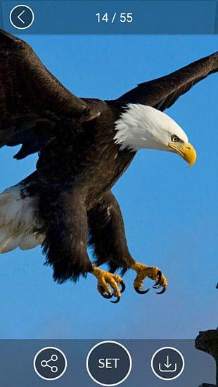 IPhone 6 Plus IPhone 6s Plus IPhone 5s Bald Eagle Desktop PNG
