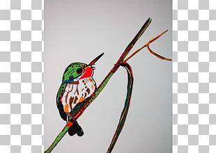 Bird Vision Beak Wing Water Bird PNG
