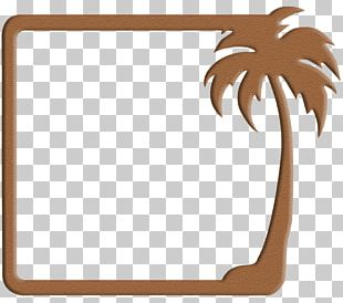Frames Arecaceae Tree Decorative Arts PNG