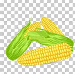 Corn On The Cob Kettle Corn Maize Drawing PNG
