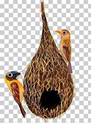 Edible Birds Nest Swallow Bird Nest PNG