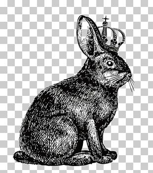 Hare Rabbit Show Jumping Drawing PNG