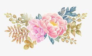 Peony Flower Watercolor Painted Floral Elements PNG