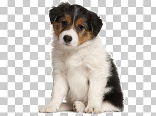 Border Collie Affenpinscher Your Puppy Horse PNG