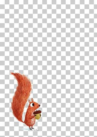 Squirrel Illustration PNG
