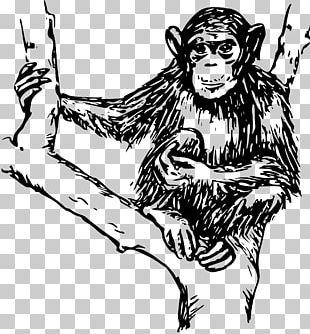 Chimpanzee Ape Primate Monkey PNG