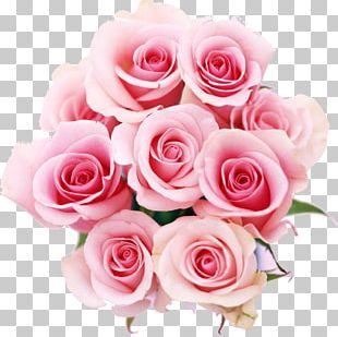 Rose Flower Color Pink PNG