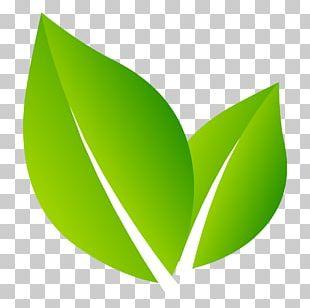 Logo Nature Leaf PNG