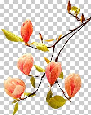 Bud Flower Poetry Plant Stem PNG