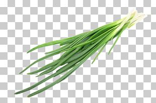 Allium Fistulosum Chives Herb Onion Ingredient PNG