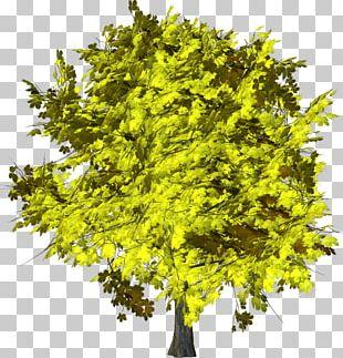 Branch Fruit Tree Shrub PNG