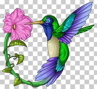 Hummingbird Beak Wing Feather PNG