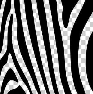 Zebra Gratis PNG