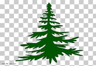 Christmas Tree Spruce Fir Christmas Ornament Pine PNG