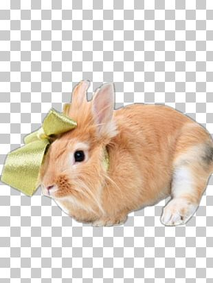 Netherland Dwarf Rabbit Holland Lop Dutch Rabbit PNG