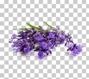 Lavender Oil Essential Oil Cananga Odorata Perfume PNG