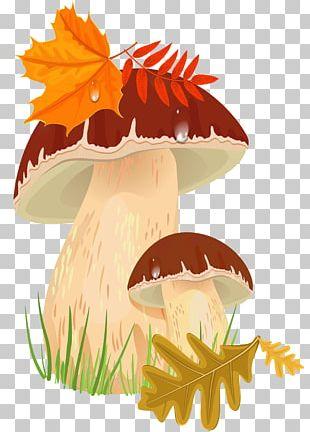 Penny Bun Edible Mushroom Autumn PNG