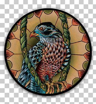 Beak Bird Of Prey Fauna Feather PNG