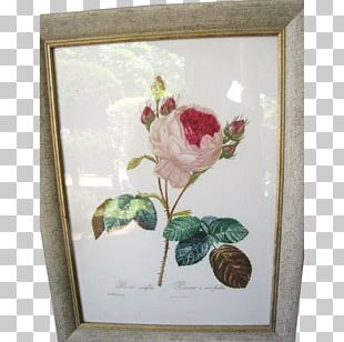 Floral Design Roses Still Life Photography Rose Family PNG
