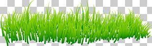 Grass Lawn PNG