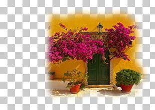 Floral Design Blog Window Flower PNG