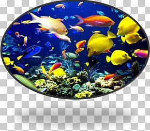 Coral Reef Fish Tropical Fish Ocean PNG