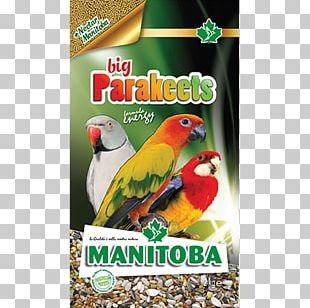 Amazon Parrot Bird Parakeet Domestic Canary PNG