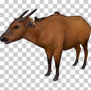 Zoo Tycoon 2 Cattle Water Buffalo American Bison African Buffalo PNG