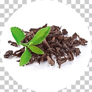 Green Tea White Tea Tea Plant Tea Bag PNG