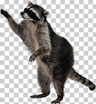 Raccoon Squirrel Skunk PNG