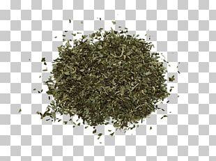 Nilgiri Tea Sencha Infusion White Tea PNG