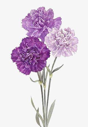 Purple Flowers PNG
