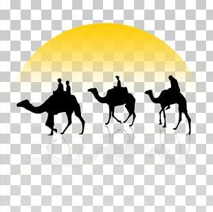 Bactrian Camel Dromedary Camel Train PNG