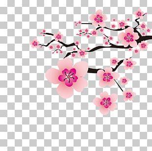 Cherry Blossom Plum Blossom Flower PNG