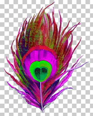 Bird Feather Pavo Color Drawing PNG